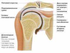 Лечение артроза плечевого сустава гимнастика 200